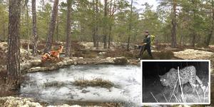Årets rovdjursinventering i länet var besvärlig. Foto: Emelie Nyman, Länsstyrelsen Stockholm
