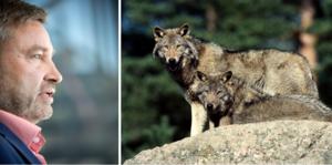 Peter Helander (C), ansvarig för jakt- och viltfrågor, underkänner regeringens rovdjurspolitik. Foto: TT