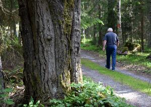 Genom reservatet löper två vackra fäbodvägar, vilket gör det tillgängligt även för intresserade som inte kan ge sig ut på skogspromenader.