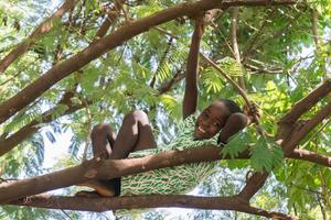 Ett träd som planteras i Vi skogen  hjälper både den lokale bonden och världens miljö.Foto: Vi skogen
