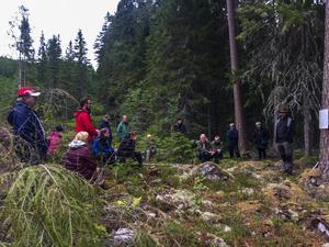 Det finns idag enskilda skogsägare som använder sig av hyggesfritt skogsbruk.