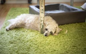Hunden Snorpan får Maria att kliva upp ur sängen varje dag.