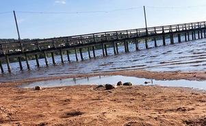 I bassängerna som bildas intill bryggan på sommaren, frodas bakterier och parasiter, och blir en hälsofara. Foto: Martin Clarstedt, miljö- och byggchef Rättviks kommun.
