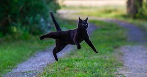 Denna bild tävlar i augusti – grannens katt poserar. Foto: Thomas Nordström