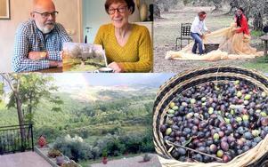 Drömmen blev sann. Charlie och Anita Henriksson hittade huset med en olivlund i Abruzzo.