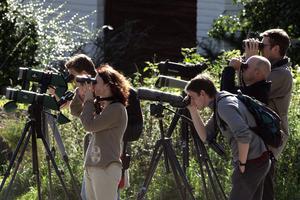 När en sällsynt fågel visar sig flockas sig ornitologer från när och fjärran. FOTO: JONAS EKSTRÖMER