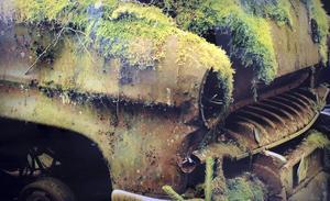 Detta ser ut att vara en Opel rekord av 1950-talssnitt som Moder natur så sakteliga håller på att återta.