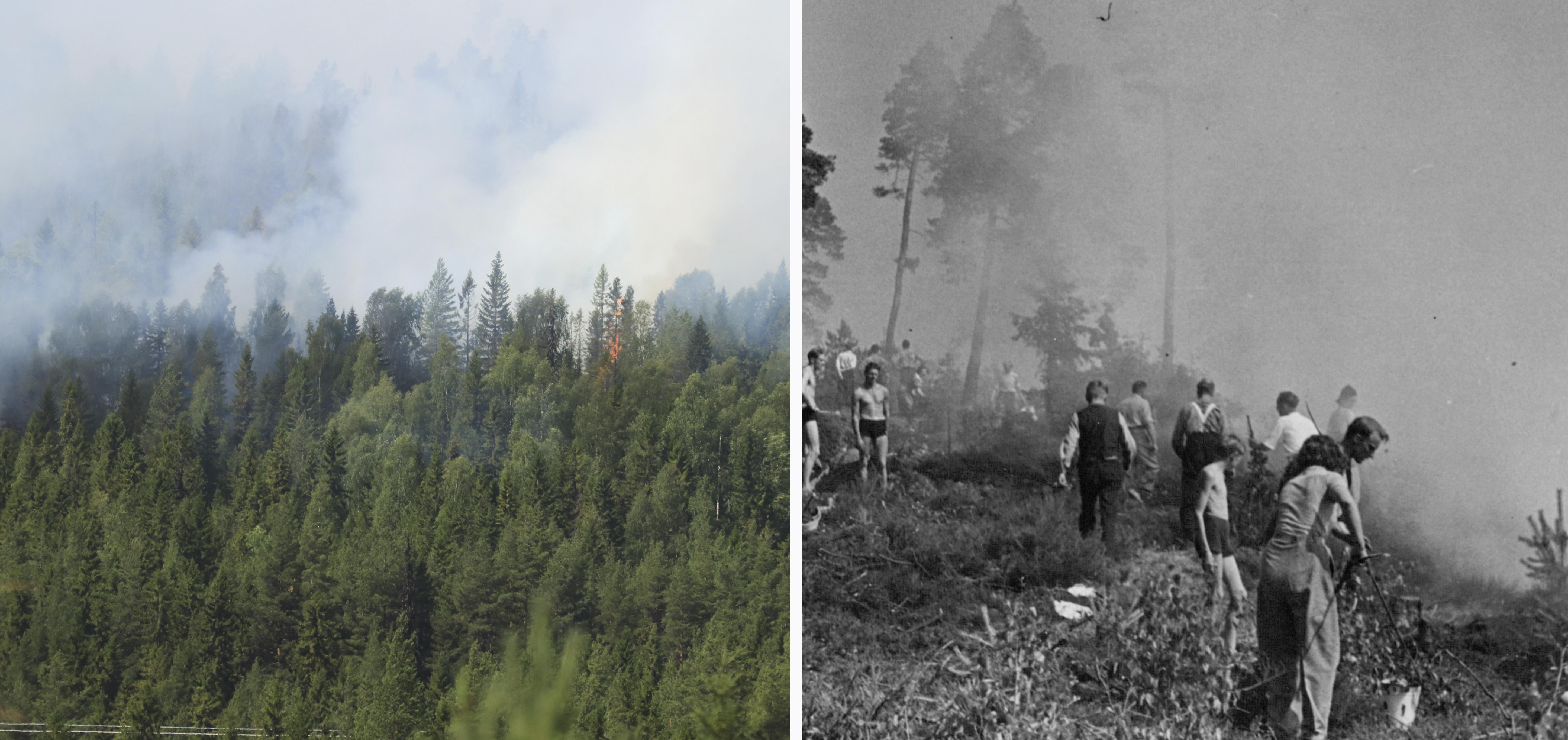 15 aringar greps for skogsbrander