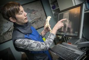 Veterinären Anna Pamuk analyserar bilderna från en höftröntgen.