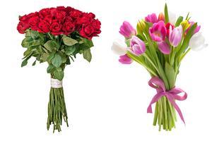 Den som vill ge bort en giftfri bukett till sin käresta bör satsa på tulpaner framför rosor, visar vår stickprovsanalys.