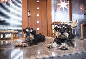Här bor även hundarna Isak och Allan.