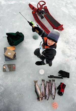 Storfiskaren Alexander Cederberg 5 år var en väl organiserad kille, priserna till vänster och fiskarna till höger i bild.
