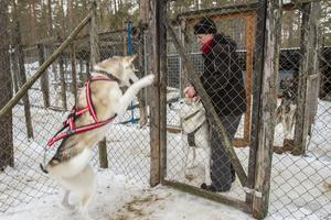 Tarja Pyykkös har åtta stycken Siberian Huskyhundar som hon tävlar med i hundspann.