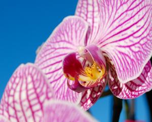min orkide i fönstret gjorde sig bra mot den klarblåa himlen
