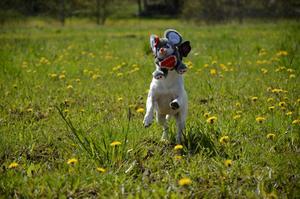 Lotus njuter av sommarvärmen med att springa runt och leka i det härliga vädret.
