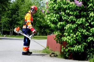 En Ljusnebo vill ge en eloge till sommarjobbande ungdomar som gör ett bra arbete i kommunen. Bilden är en genrebild.
