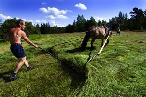 Doris. Det är något speciellt med Harmsarvets nordsvenska brukshäst.