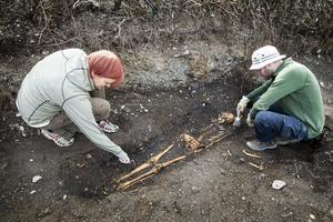 Länsmuseets arkeologer Anna Engman och Anders Edvinsson jobbar med utgrävningen vid Frösö kyrka.   – En sådan här utgrävning får man kanske bara vara med om en gång i livet, säger Anna Engman.