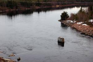 Ännu märks det inte att det är en större vårflod på gång i Ljusnan. Bilden är från nedströms kraftverket vid Svegssjön. Foto: Leif Eriksson