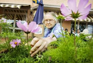Inger Sjögren påtar i odlingarna.