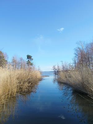 En bild jag tog på väg över kanalen till stugan på Tidö-Lindö. Det vackra ljuset i kombination med den fantastiska naturen gjorde det till ett motiv som måste förevigas!