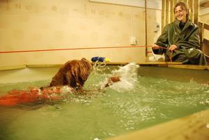 Det är regnrock på när Caesar tränar i simbassängen.