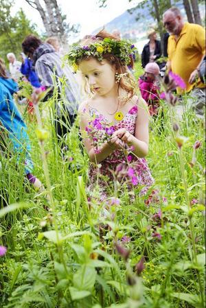 Felicia Ragell är djupt koncentrerad på att hitta många blommor till midsommarstången som snart ska resas.