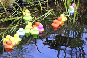 Verk på tillväxt. Plastankor inväntar mer grönska i en av parkens dammar. Av duon Klarzon-Mberg.