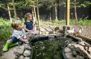 Elma, fem år, och Gideon, två år, har hjälpt till att bygga löpankorna Gull-Anna, James-Tony och Lillemors nya hem.