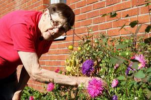 Det blommar i Ethel Engbergs rabatter. Hennes 85-åriga, gröna fingrar, får fortfarande allt att grönska.
