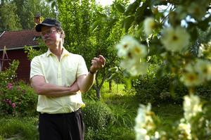 Väldoftande. Stor och yvig slingrar sig den rikligt vitblommande Rosa helenae eller honungsrosen upp i äppelträdet och sprider en ljuvlig doft. Bosse Kristenson berättar att den var sen i starten och tog flera år på sig innan första blomman slog ut.