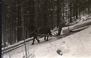Timmerkörning med häst