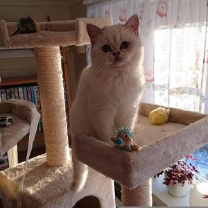 516) Detta är Vanilla, 2 år. En väldigt fin o kärvänlig katt! Foto: Thomas Fredlund