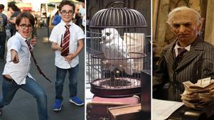 I J.K. Rowlings barnböcker om Harry Potter utspelar det sig många hisnande äventyr på  Hogwarts skola för häxkonster och trolldom. (Bilden är ett montage)