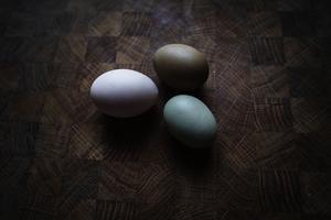 Äggen kommer i flera olika kulörer.  De ser fram emot att de även snart ska få ägg från ankorna.