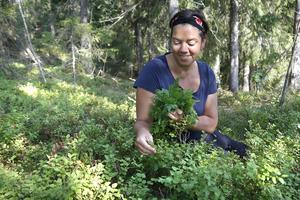 Skörda söt spansk körvel med smak av anis redan i april–maj. Plocka också färska blåbärsblad så fort de har slagit ut och torka bladen till te, tipsar Katja Wiezell.