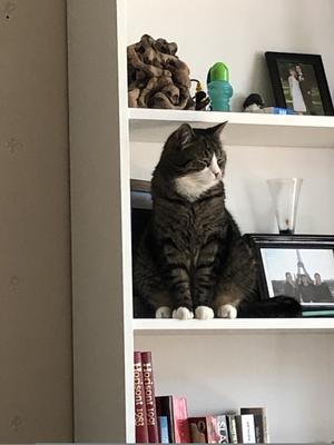 220) Min fina Nelson sitter på hyllan och väntar på att få godis Foto: Kristina Grip