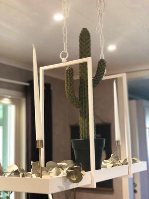 Marita har tänkt lite utanför boxen när hon inrett sitt hus, som här: En kaktus i taket.