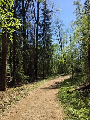 På väg in i skogen.