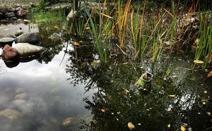 Snart fem månader efter stölden av Anders Zorns Morgonbad är det fortfarande tomt på skulpturer i Botaniska trädgårdens damm. Vatten- och sumpväxterna finns dock kvar.