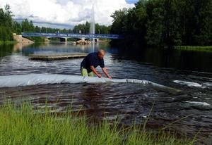 Fisksläpp i Ljusnan vid Lillön.