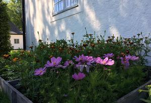 Blomster i kragpallar som ska ut i något av trädgårdsrummen.
