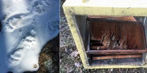 Björnspår i snön till vänster. Bilden till höger visar hur björnen krafsat i en bikupa.  Bild: Privat