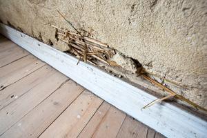 På övervåningen finns ett rum där lerkliningen finns kvar på väggarna. Mattias tänker renovera den.