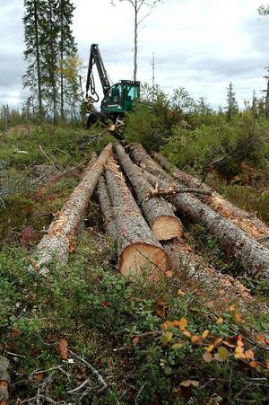 Många nyutbildade skogsmaskinförare är inte beredda på ensamheten som väntar dem i skogen.