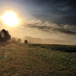 En vacker morgon . Solen försöker bryta fram.