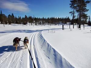 Samsyn behöver uppnås mellan turismen,   rennäringen och andra intressenter om nationalparksprocessen ska fortsätta. Bilden från Holmenkollenspåret i Vålådalen