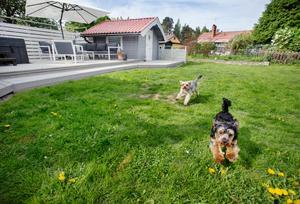 Det finns gott om gräsyta kvar för Otto och Ejja att springa på.