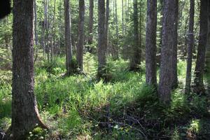 En del av ett klibbalkärr i Nerigården som anses som extra viktigt för fågellivet.Foto: Stig-Åke Svensson