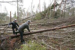 Det går inte att ta sig fram särskilt långt i skogen. Marianne och Hans Johansson hoppas få hjälp att röja undan alla omkullblåsta träd inom de närmaste månaderna. – Annars finns det risk att granbarkborren sprider sig, det är man lite orolig för, säger Hans.